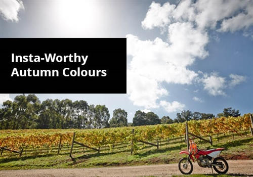 Autumn Colour on the Mornington Peninsula