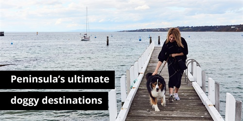 Peninsula's Ultimate Doggy Destinations