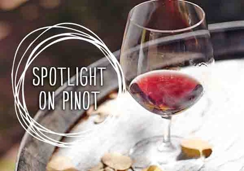 Spotlight on Pinot Noir