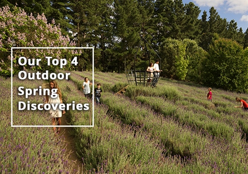 Our Top 4 Outdoor Spring Things to (re)discover