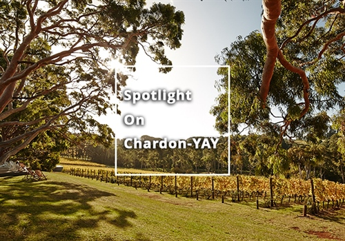 Spotlight on Chardon-Yay