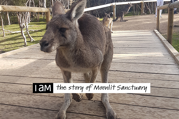I AM the story of Moonlit Sanctuary